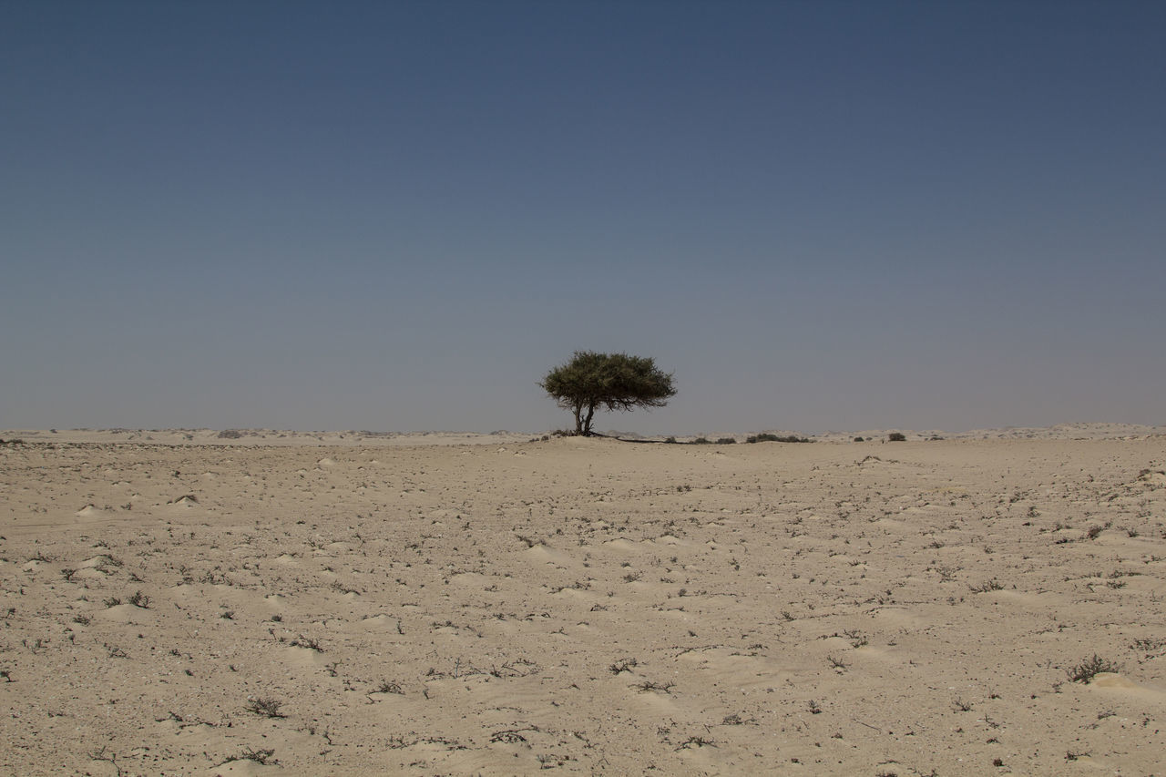 landscape, clear sky, nature, tranquil scene, tranquility, tree, day, scenics, beauty in nature, copy space, lone, outdoors, field, arid climate, no people, blue, desert, sky