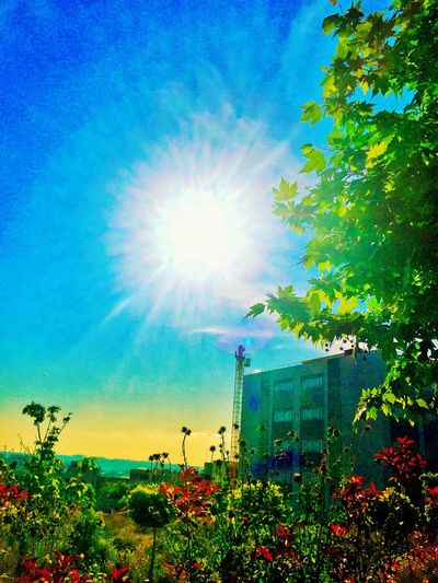 Plant Sky Beauty In Nature Sunlight Growth Tree Nature