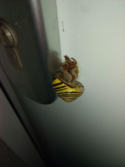 Schnecke Türsteher Doorguard Black And Yellow  Nature No People Outdoors Slug Snail Bugs Nature Creatures Slug Sluggish Slug Race