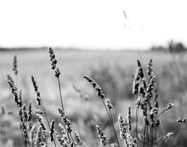 Location: KartoffelBerg (Whb) Camera: Canon EOS 50E Film: AgfaPhoto APX 100 (new) Developed in D-76 1+1 15,5min EyeEm Best Shots - Black + White Black & White Monochrome Canon EOS 50E Apx100new Kodak D-76