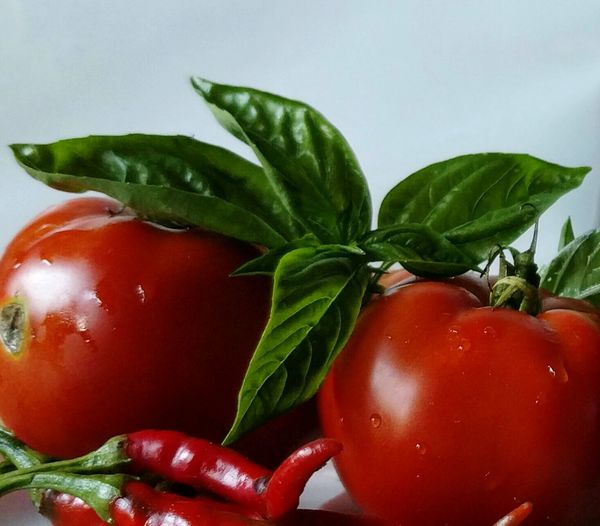 Food And Drink Freshness Red Leaf Healthy Eating Close-up Food Vegetable Indoors  Still Life Green Color Vibrant Color Selective Focus No People Tomato Medium Group Of Objects Large Group Of Objects Basil Tomato And Basil