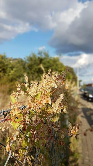 Pflanzenwelt Steinhude Straßenfotografie Autumn Sky