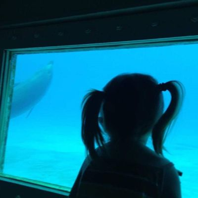 Carmella Dolphin Disney Miamiseaquarium Pigtails  Throughtheglass Throughhereyes MyGIRL Luvmygirl