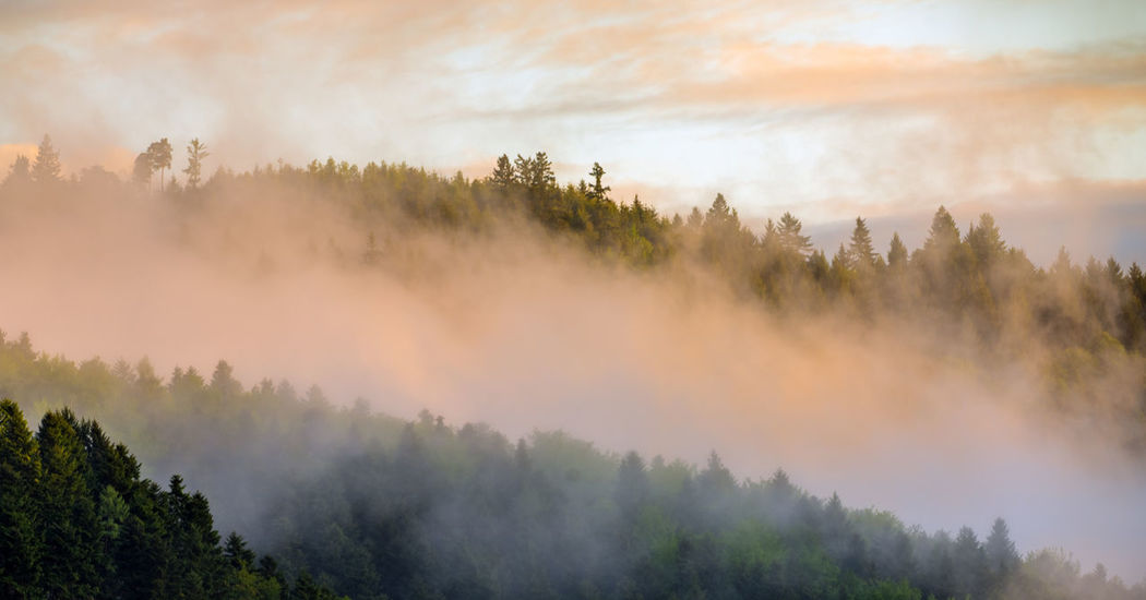Morning Schwarzwald Beauty In Nature Black Forest Burning Day Fog Forest Forest Fire Growth Hazy  Landscape Mountain Nature No People Outdoors Scenics Sky Sunrise Tranquil Scene Tranquility Tree
