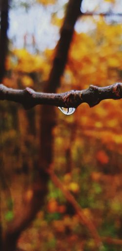Universe in a Drop. Water Dripping Leaf Autumn Red Close-up Rainy Season Droplet RainDrop Wet