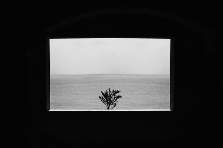 Close-up of plant by window against sea