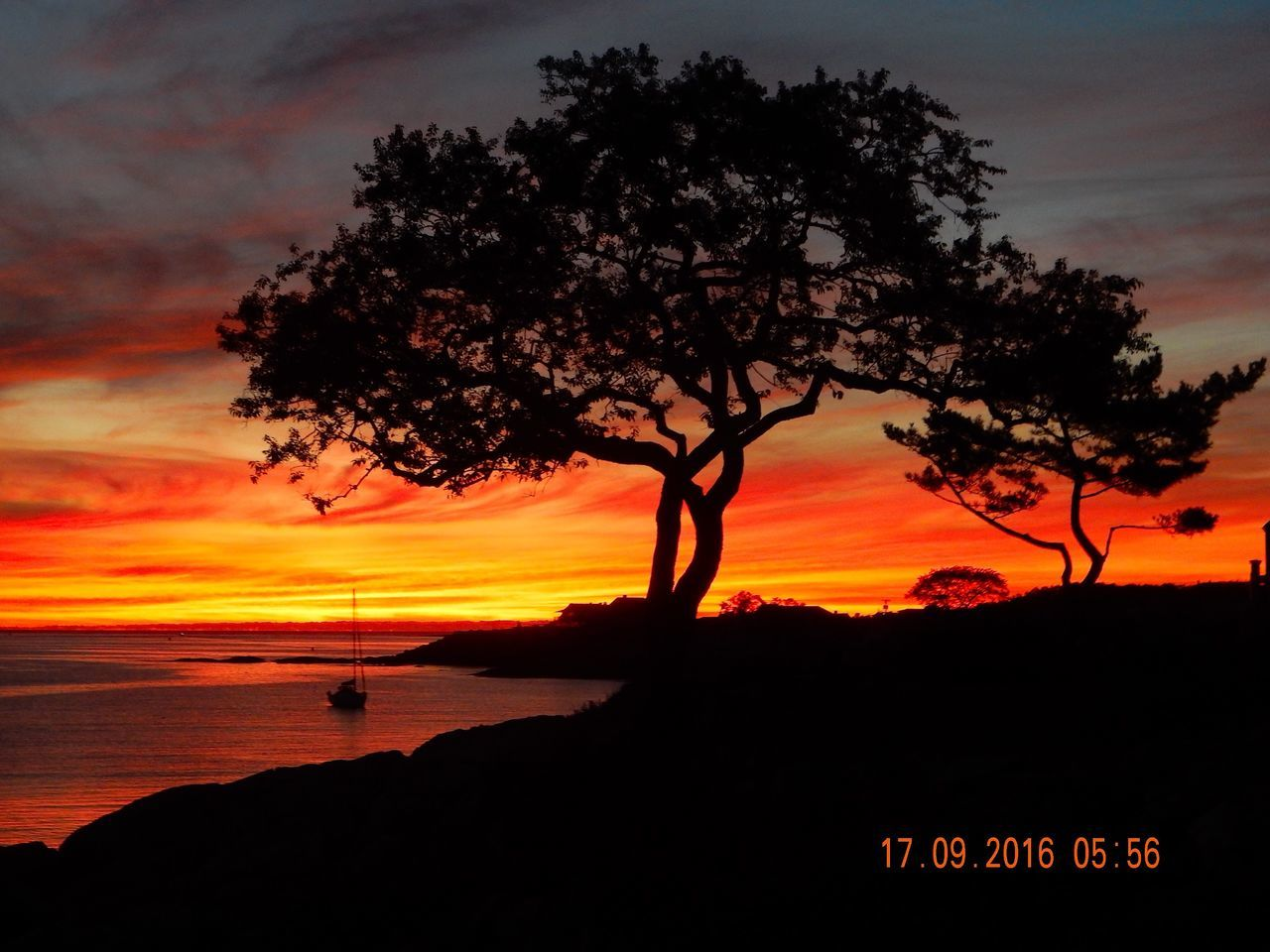 tree, sunset, silhouette, orange color, scenics, beauty in nature, nature, tranquility, sky, tranquil scene, outdoors, no people, sea, growth, tree trunk, landscape, day