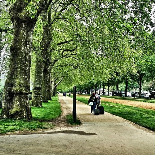 London England Brutish Street trees grass Beautiful nice lovely Wonderful love sweet amazing loveit