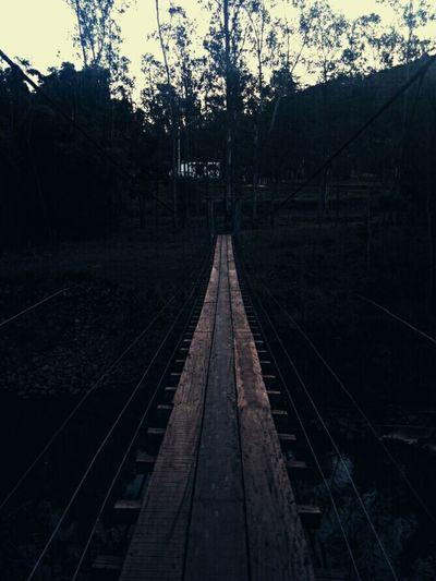 Tree Nature No People Bridge Rail Transportation Railroad Track Tree Outdoors No People Night Nature Sky
