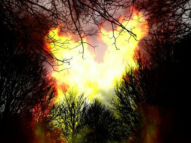 Fire Trees Heavy Edits Product Of My Boredom