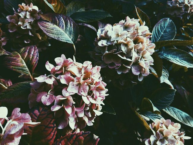 Flower Fragility Plant Beauty In Nature Nature Growth Flower Head Outdoors Freshness My Favorite Flowers Juicy Colorful Fondness
