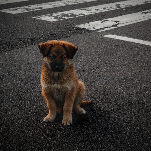 High angle view of puppy on road