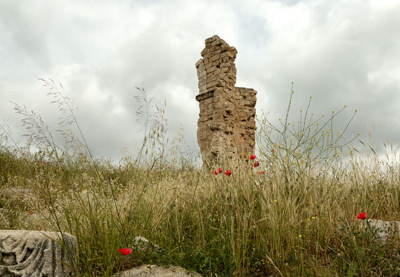 Ruins Among Poppy Flowers Beauty In Nature Bloom Blossom Christianity Church Cloud - Sky Field Fields Floral Grass Historical Landscape Nature Outdoors Red Color Red Flower Ruins Architecture Saint Thekla Silifke Sky Springtime Stone Material Turkey Wildflowers
