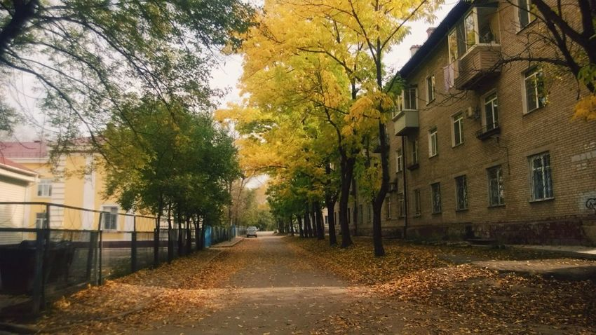 Hello World Autumn🍁🍁🍁 Relaxing Nature Beauty Russia Khabarovsk Windy Day Taking Photos ~