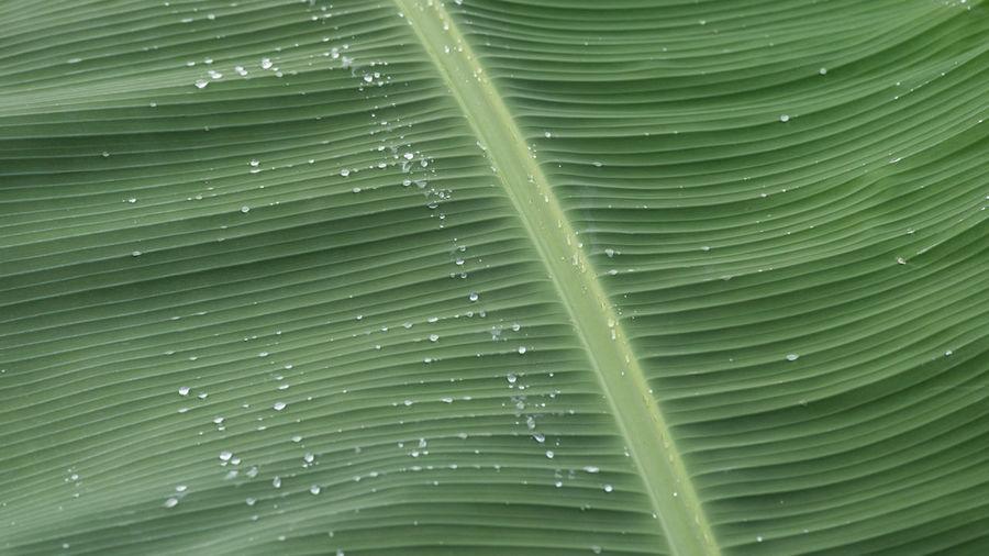 Banana leaf and