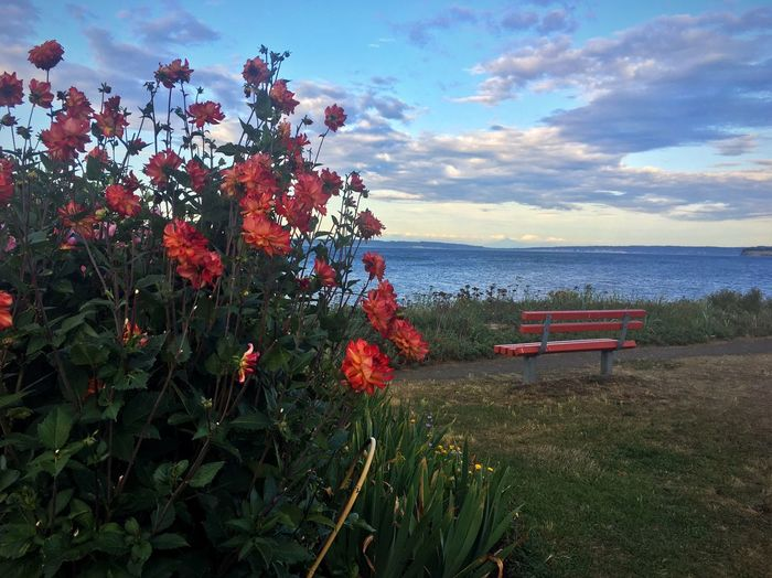 Red flowering plants by sea against sky