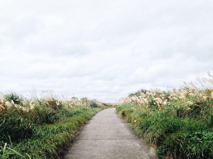 Path. Path Grass