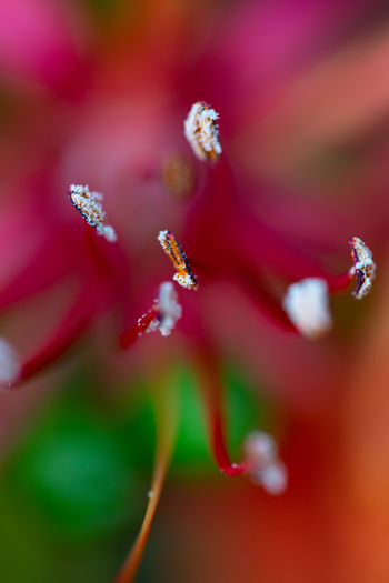 Macro shot of raindrops on red flowering plant