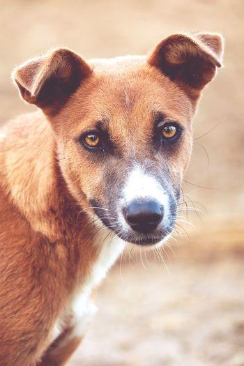dog face 🐕 Dog