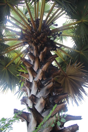 Ankor Thom Cambodia Travel Beauty In Nature Nature No People Palm Tree Tree
