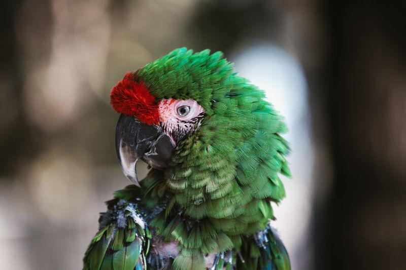 Sick exotic parrot