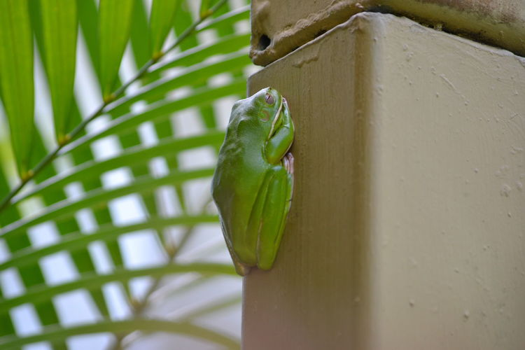 Close-Up Of Frog On Built Structure