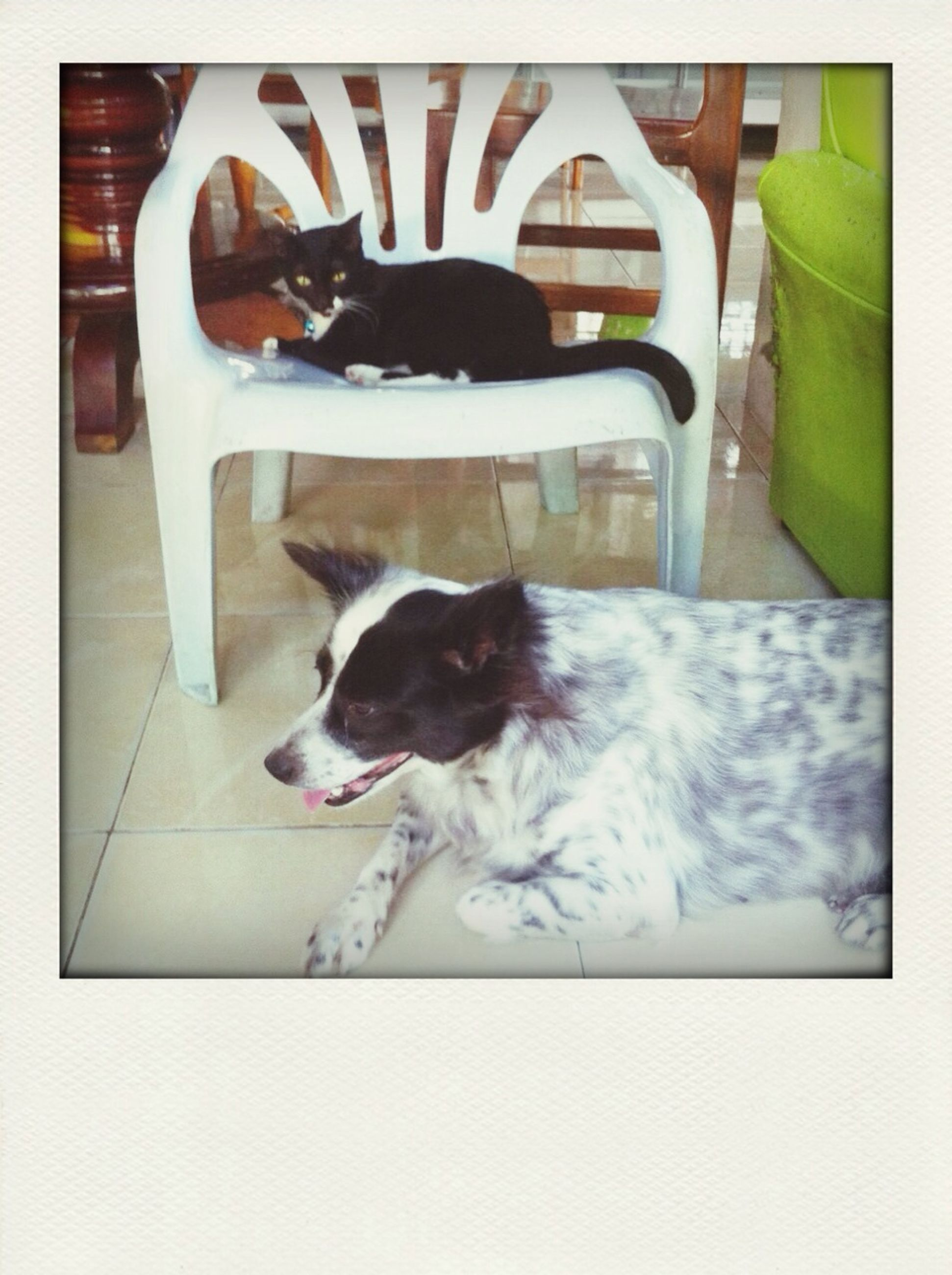 transfer print, domestic animals, pets, animal themes, mammal, one animal, auto post production filter, relaxation, cat, domestic cat, resting, lying down, indoors, dog, sleeping, feline, full length, high angle view, animal, zoology