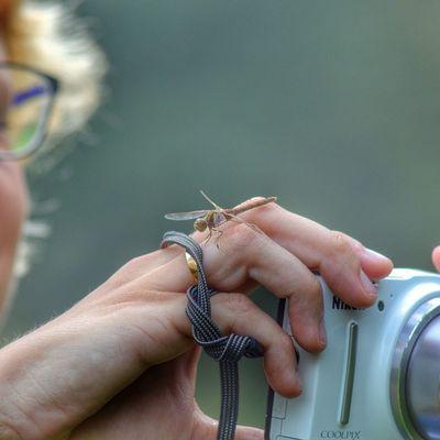 Libelle Nikon Dragonfly Naarden