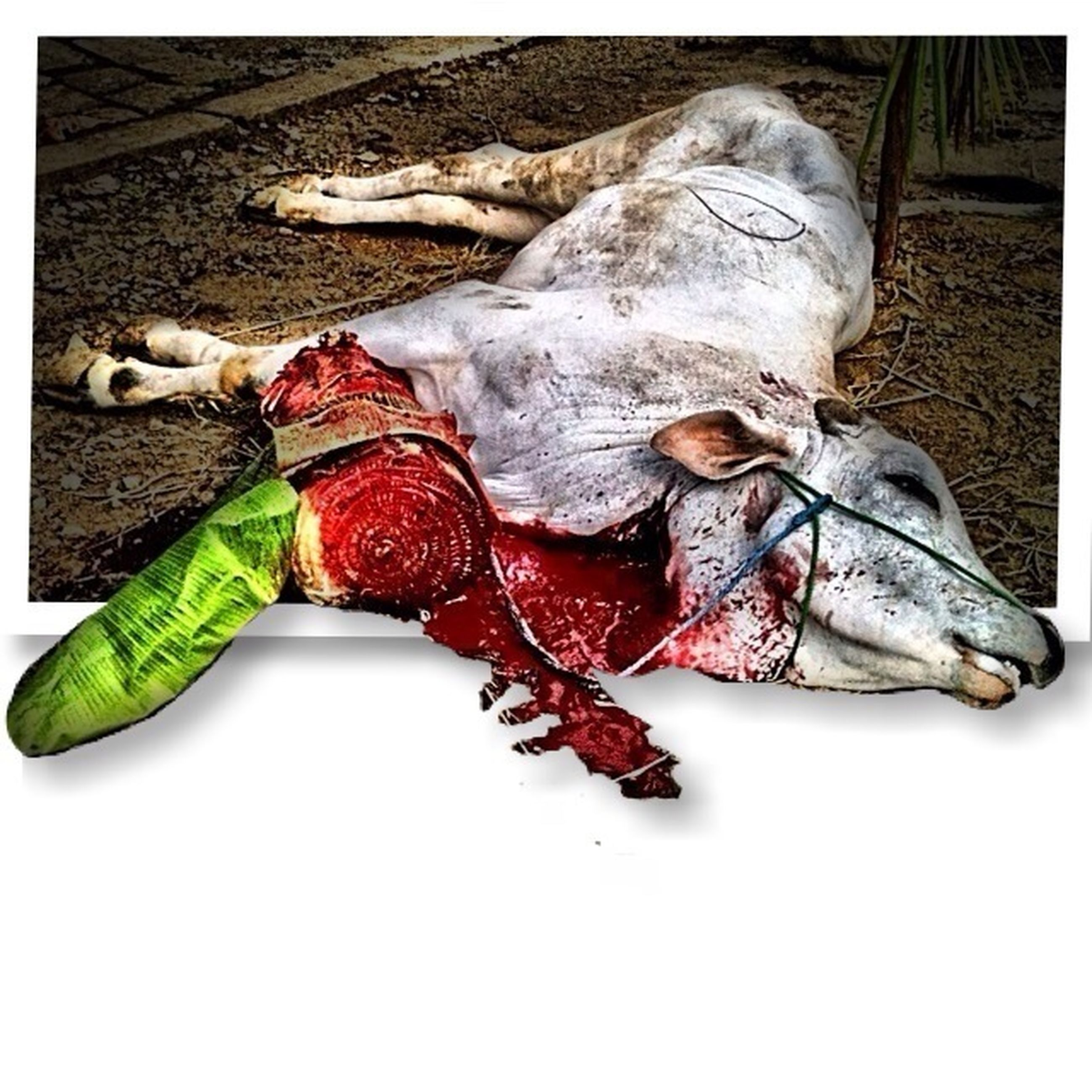 transfer print, auto post production filter, high angle view, shoe, still life, animal representation, full length, animal themes, dead animal, toy, day, field, outdoors, childhood, no people, art and craft, vegetable, close-up, heap, variation