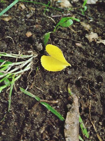 Love is on the earth ;) Love Heart Leaf Leaf 🍂 Leafs 🍃 Nature Nature Photography Nature_collection Naturelovers Grass любовь сердце сердечко трава Природа эко экология Eco Ecology Fine Art Photography Showcase July