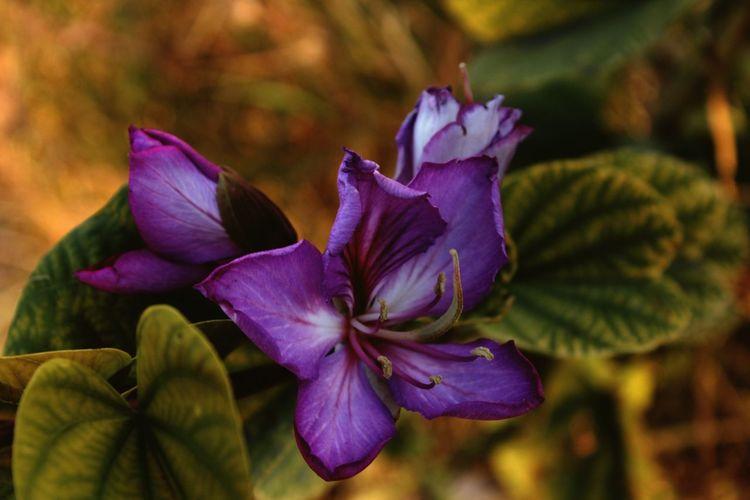 Fragility Beauty Flower Nature