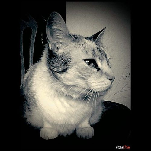 Cat Animal Garfield Futrzak