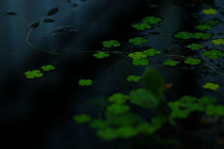 Waterweed Leaves The Purist (no Edit, No Filter) FUJIFILM X-T1 XF90mm EyeEm Nature Lover EyeEm Best Shots EyeEm Best Shots - Nature