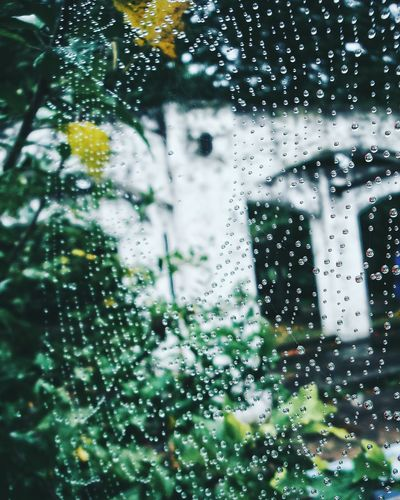 Web Web Spider
