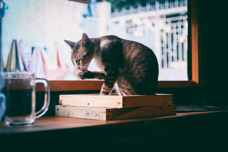 Animal Themes Cat Domestic Animals Domestic Cat EyeEm Gallery EyeEm Nature Lover Hoang Ann Mammal Nothingisordinary One Animal Pets Saigon Toatau Week On Eyeem