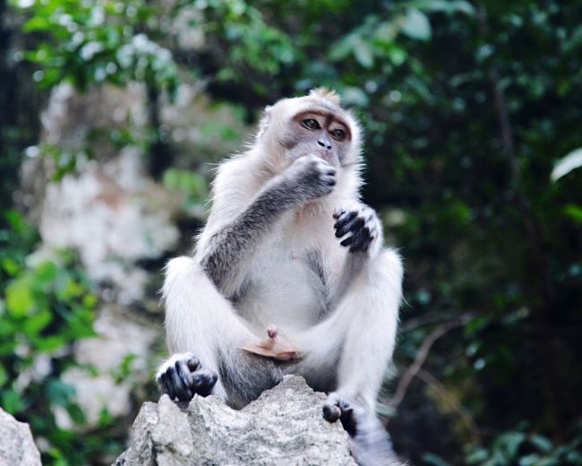 Close-up of monkey sitting on rock