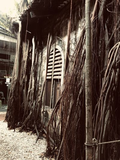 Trees growing in abandoned building