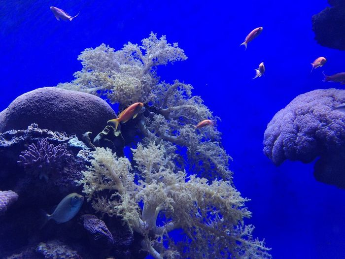 Coral Coralreef F3 Filter Nature Nature_collection Postcard From Eilat, Israel