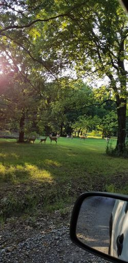 Deer Tree Car