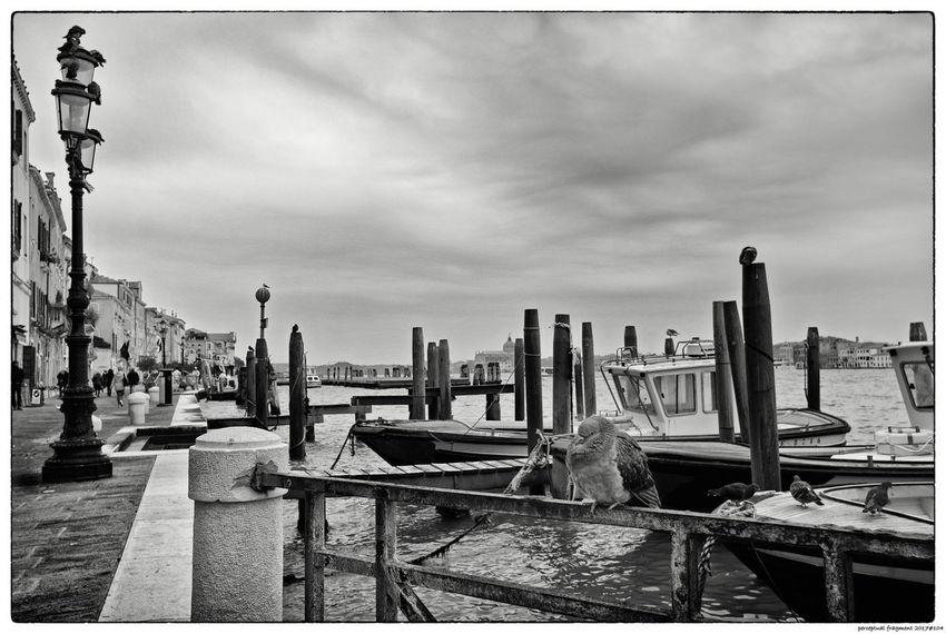 Gondeln Gondola Italia Italien Venedig Venezia Italy Venice