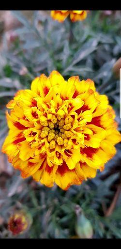 Sunflower #yellow #flowers #onway Photography #throwback #sunflower #beauty #naturalbeauty #beautiful #NoFilter #photography #EyeEm EyeEmNewHere