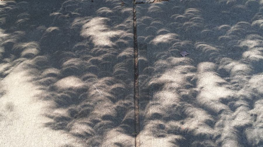 Nature Shadows & Lights Solar Eclipse 2017 Eclipse 2017 Eclipse Shadows Eclipse Shadows Through The Trees Phenomenon Shadows Solar Eclipse Sunlight And Shadow