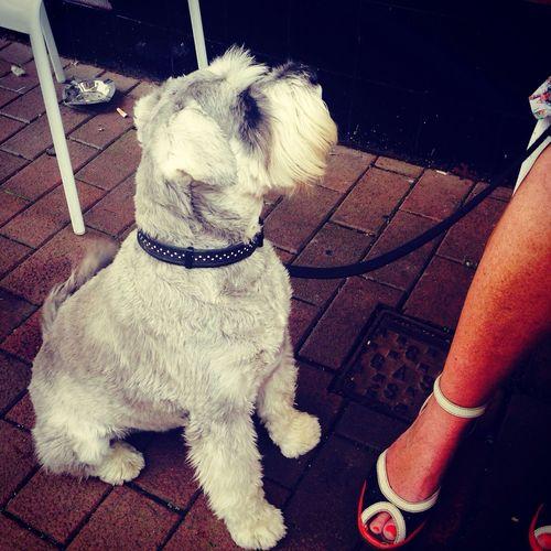 Relaxing Meeting Friends The Explorer - 2014 EyeEm Awards Dog Walking
