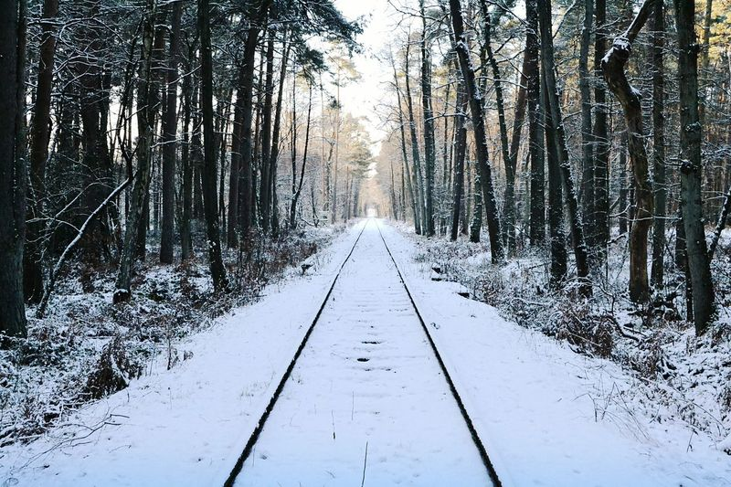Winter Tree Snow The Way Forward Nature Forest Tranquil Scene Tree Trunk Beauty In Nature Scenics Bare Tree Tranquility Landscape Winter Wonderland Rails Railroad Track Railroad Railway Wanderlust Sunlight Cold Temperature Woods Wandering Tracks In Snow A New Beginning
