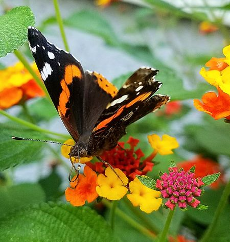 Papillion Butterfly - Insect butterfly - insect Insect Animal Themes Animals In The Wild One Animal Flower Animal Wildlife Nature Fragility Butterfly No People Perching Animal Markings Beauty In Nature Full Length Outdoors Day Plant Freshness Growth