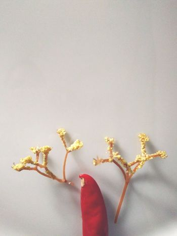 leaves shadow Leaves Natural Beauty Objects EyeEm Selects Visual Creativity Summer Exploratorium Summer Exploratorium Flower Christmas Decoration Studio Shot Christmas Celebration Gold Colored Sweet Food Christmas Lights Reindeer Advent Religious Celebration Origins EyeEmNewHere Adventures In The City This Is Latin America
