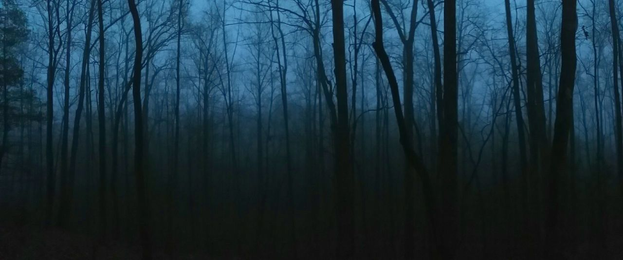 Forest Tree WoodLand Nature Backgrounds Bare Tree No People Outdoors Scenics Branch Beauty In Nature Twilight Fog_collection Foggy Night Fog Blue Fog