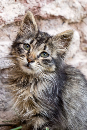 Young Cat in