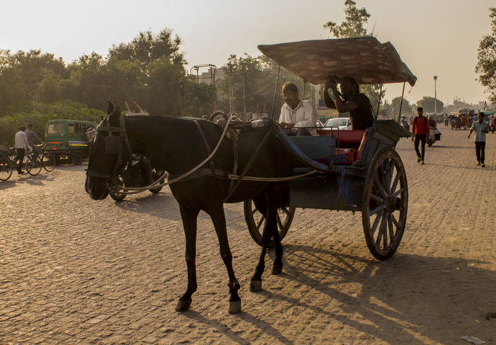 EyeEm Selects Working Animal Transportation Domestic Animals Outdoors Horse Cart Mammal Tonga Photography Camera Old Lucknow Lucknowdiaries Lucknow👌City Travel Photography Travel Destinations Story Person Photographing Cameras