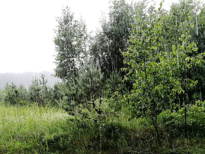 Lithuania summer rain First Eyeem Photo Summer Rain Refreshing Green Forest